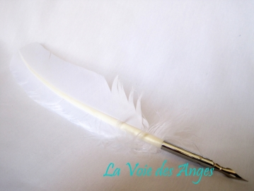 Quill with Brass Nib - White